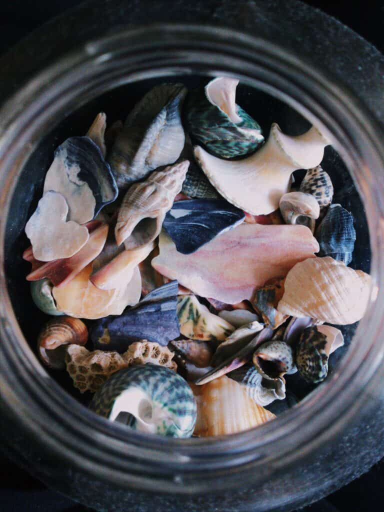 non candy stocking stuffer - shells