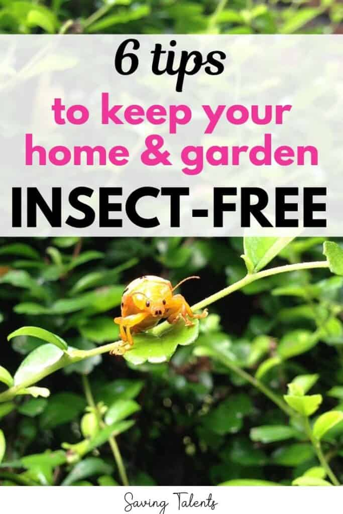 6 Solutions to Make Your Garden and Lawn Free from Insects