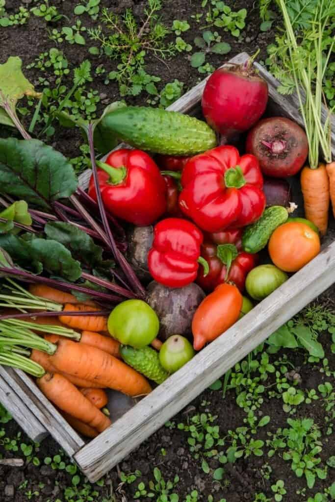 eat healthy on a budget by growing a garden